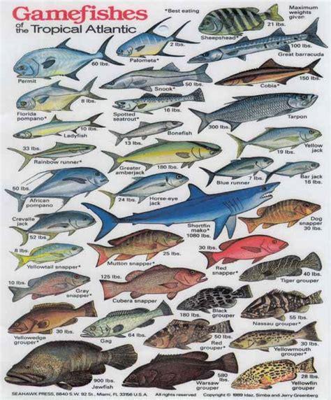 vente chambre d hotes poissons de l 39 atlantique lanzarote îles canaries