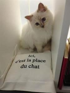 Choupette Chat Karl : king karl 39 s choupette the perfect pet read i d ~ Medecine-chirurgie-esthetiques.com Avis de Voitures
