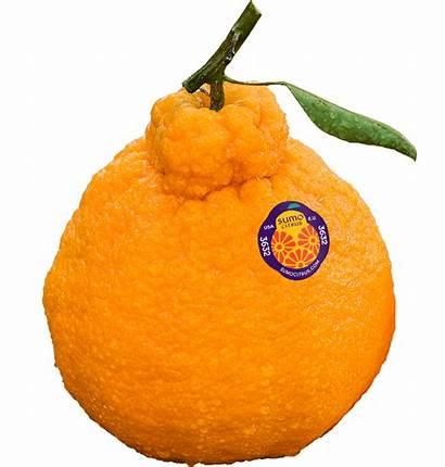 Sumo Citrus Orange Fruit