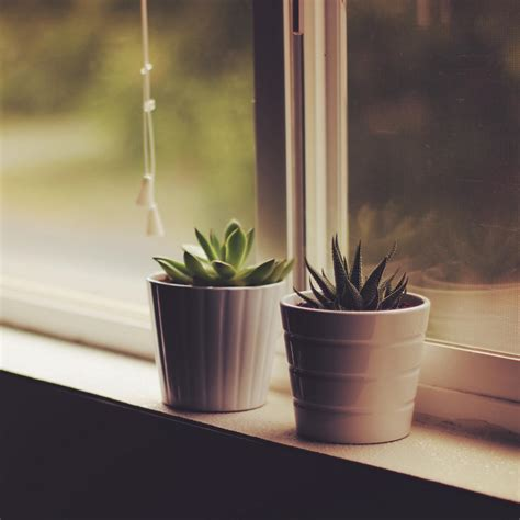Indoor Window Sill Plants by Wallpaper 1280x1280 Flower Pots Window Sill