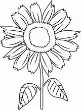 Sunflower Clipart Line Clip Cartoon Coloring Pretty Library sketch template