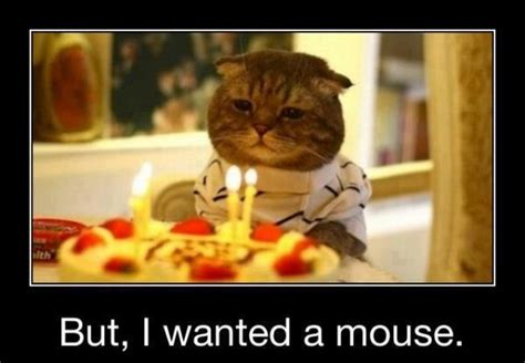 happy funny birthday pictures images
