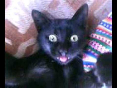 gato negro sacando la lengua youtube
