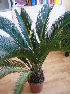 welche palme habe ich welche palme habe ich  erkennen