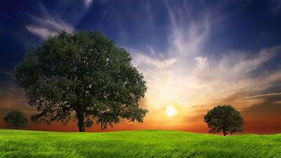 Nature Awesome Backgrounds Trees Landscapes Field Desktop