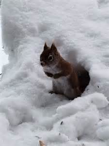 Funny Animals of the Week