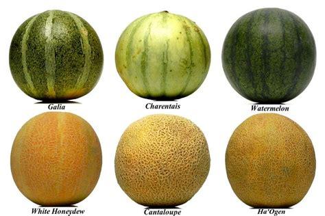 #melon Storyboard (c)2011 Ladomestique.com