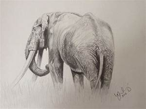106 best Elephants: Drawings images on Pinterest | Animal ...