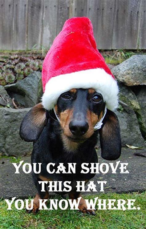 dachshund christmas meme festival collections