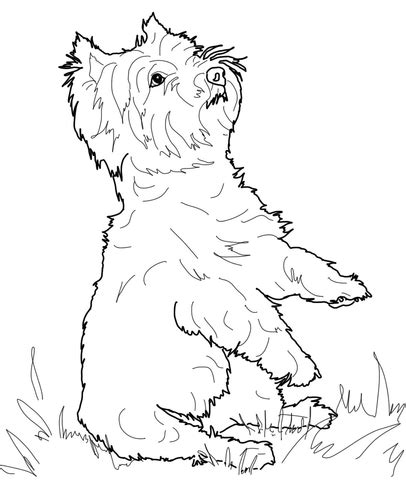 west highland white terrier coloring page supercoloringcom