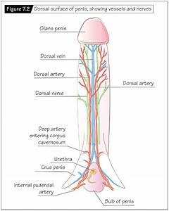 Heffner  The Reproductive System At A Glance  4  E