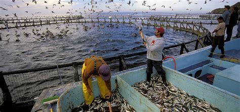 effects  aquaculture  fish farming  ocean health
