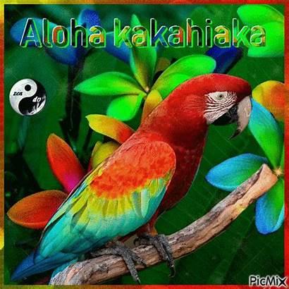 Aloha Kakahiaka Picmix