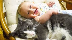 Cute Cats And Dogs Love Babies Compilation Video Hd