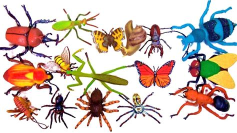 Insects Names For Kids Bugs Beetles Spiders Toy Videos For Children Learn Colors Teaching Kids