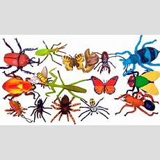 Learn Insect Names For Kids! Educational Toys For Children Learn About Bugs Video Learn Colors