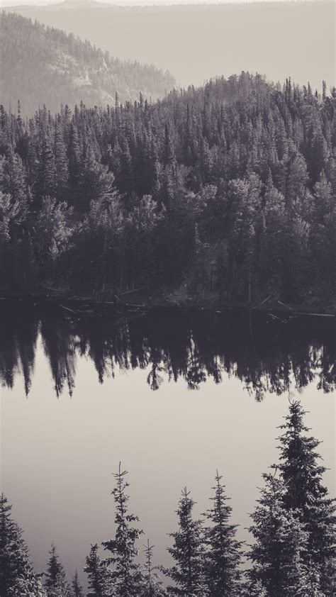 pine forest iphone wallpaper  images