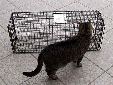 stray cat trap catch a stray cat