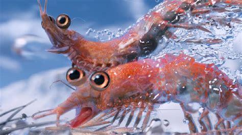 krill harvest threatens  oceanic food chain nt news