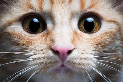 Cat Nose Eyes Animals Face Mustache Stefan
