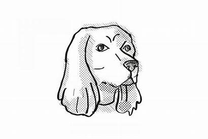 Spaniel Cartoon Cocker Drawing Dog Designbundles Illustrations