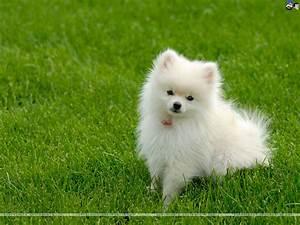 Cute Little White Dog Graphic