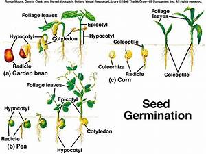 Timeless Environments  Seed Germination  U0026 Old School