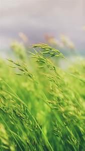 banner download grass field wallpaper 2160x3840