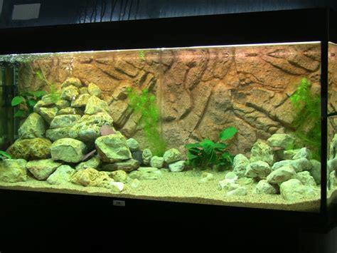 poisson lac tanganyika aquarium d 233 cor aquarium tanganyika