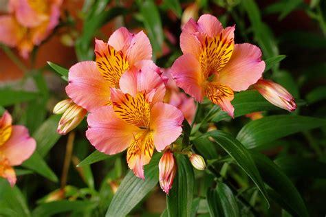 Flores Para Decorar Em Cada Estação   Flores - Cultura Mix