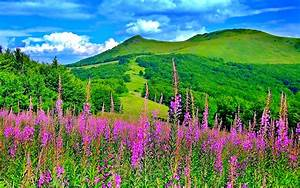Beautiful Picturesque Scenery with Wonderful Pink Flowers ...