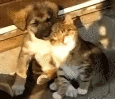 sleepy puppy gifs find share  giphy
