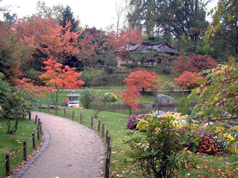 Le Jardin Japonais De Hasselt  Chrysanthèmes 3