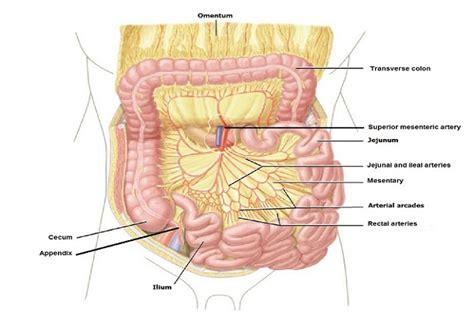 Corpo Umani Organi Interni Interno Corpo Umano 28 Images Anatomia Humana 211 Rg