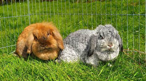 Gabbia Per Conigli Nani by 2 Conigli Compro Una O Due Gabbie Pro E Contro