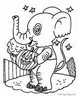 Elephant Coloring Halloween Printable Elephants Ausmalbilder Preschool Costum Amazing Disegni Colouring Konabeun Pumpkin Kostenlos Zum Atividades Pig Outline Printables Drawing sketch template