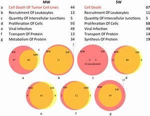 Wiring Diagram  34 Endocytosis Vs Exocytosis Venn Diagram