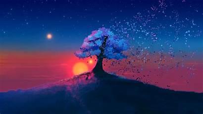 Dark Landscape Sunset Tree Laptop Background Tablet