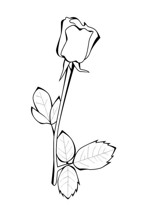 disegni da colorare brawl rosa sta disegno di la rosa da colorare