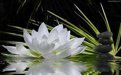 Flower Zen Flowers Stone Wallpapers Desktop