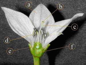 mengawinkan bunga persilangan tanaman sejenis
