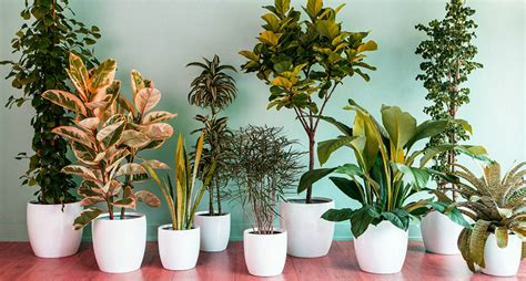 best indoor plants slucasdesigns