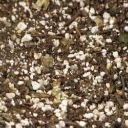 Best Potting Soil for Plants