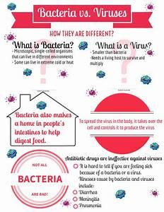 Bacteria Vs  Viruses