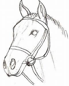 Pferd realistisch zeichnen - DekoKing - DIY Bastelideen ...