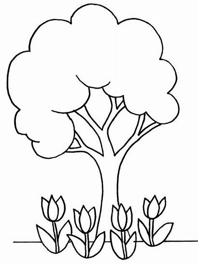 Coloring Plant Pages Flowers Tree Plants Colouring