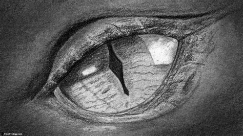 draw  dragons eye close  drawing