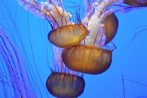 jellyfish illustration  stock photo