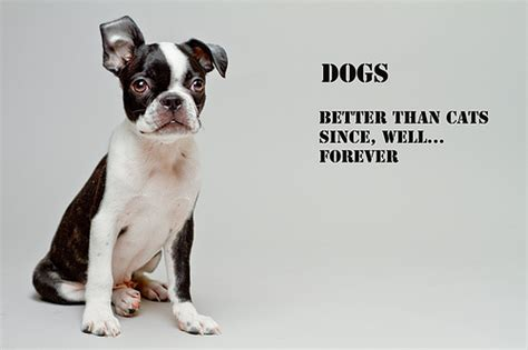 cats are better than dogs dogs flickr photo sharing