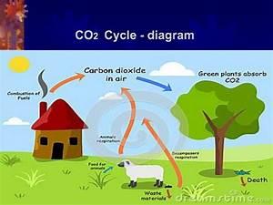 Diagram Carbon Oxygen Cycle